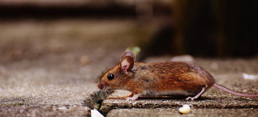 muizenplaag 2
